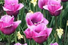 多伦多的春天