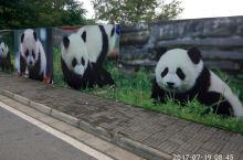 都江堰之熊猫乐园 7月19日上午,我们顶着烈日,满心欢喜地来到都江堰熊猫乐园。想亲眼目睹可爱的大熊猫