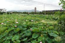 龙凤山生态园