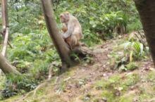 黔灵山的猴子🐒