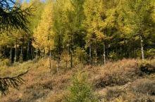 苏木山森林公园