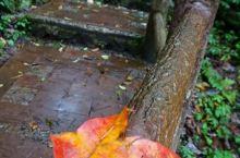 龙苍沟晚秋的彩色