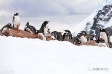 这个签证难度爆表的国家,竟然对中国开放10年签证!去南极更方便了!