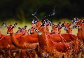 坦尚尼亞 | 伴隨著狂野奢華,用不一樣的視角開啟動物天堂