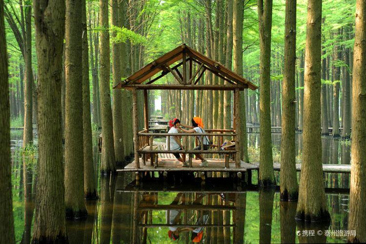 Lizhong Water Forest Park1