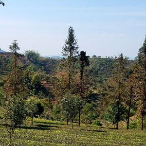 中华普洱茶博览苑旅游景点攻略图