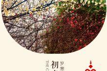 """初春颜色:梅花是中国十大名花之首,与兰花、竹子、菊花一起列为四君子,与松、竹并称为""""岁寒三友""""。在严"""