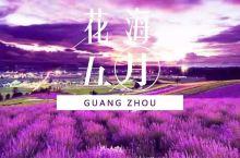 广东最美紫色花海盛开,去什么普罗旺斯!重点还是负离子胜地!