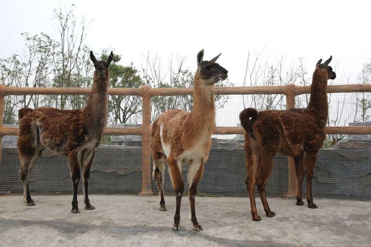 타이저우 야생동물원