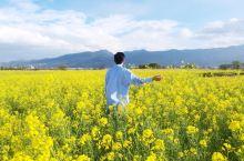 #元旦去哪玩#一个在丽江生活三年的人给你的一点旅行建议