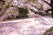 赏樱乐事    错过东京、京都的樱色?那就一路往北,去一次樱花仙境