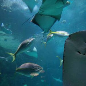 加拿大瑞普利水族馆旅游景点攻略图