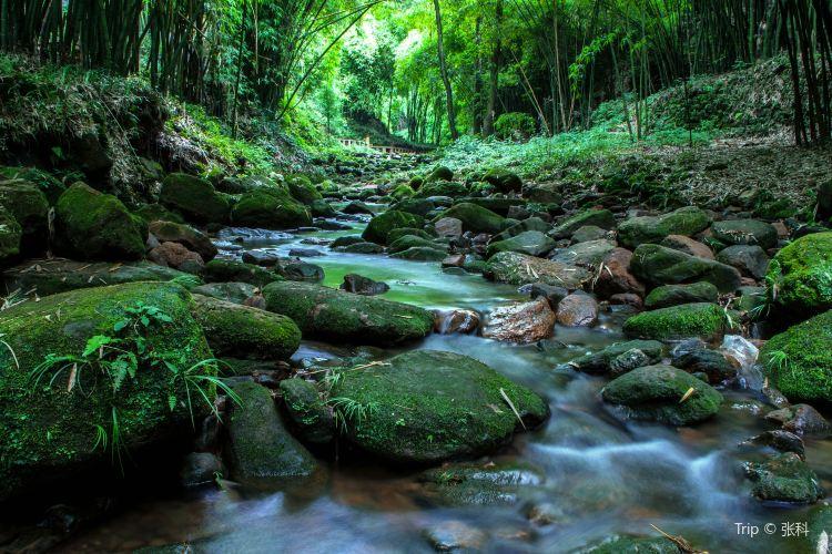 Bamboo Canyon Scenic Area (Jinji Valley)1