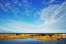 青海湖-夏