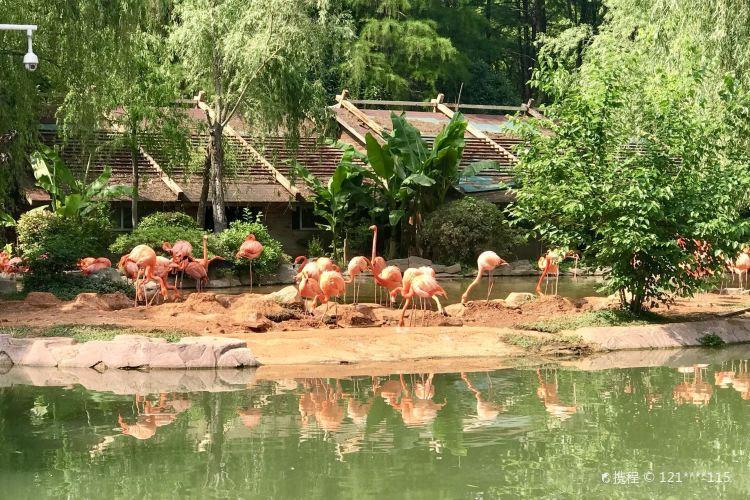 Wuhan Zoo3
