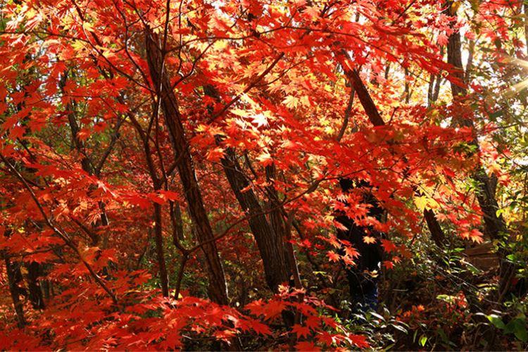 Yulongxi Primeval Forest Park3