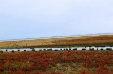 北戴河国家湿地公园   天然氧吧   鸟语花香