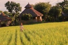 泰国丨比普罗旺斯还美腻的稻田,了解一下吧!