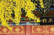 坐上公交去旅行!郑州4条绝美公交线路曝光!1块钱就能赏美景!