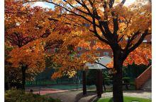 #金秋红叶#洞爷湖的秋色