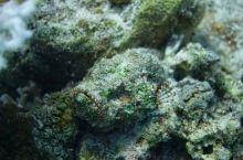世界十大潜点之一 埃及红海