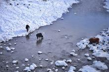 阿尔山旅行,看皑皑白雪