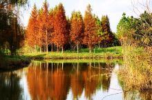 上海崇明島明珠湖秋色