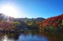 把姹紫嫣红看遍,登高见层林尽染——济南红叶谷
