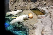 旭川动物园,没有臭味,干干净净!