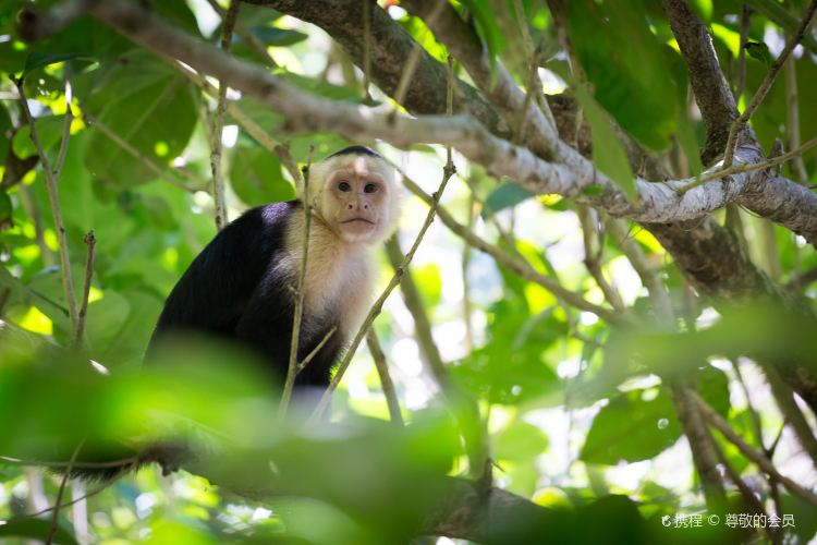 Manuel Antonio National Park2