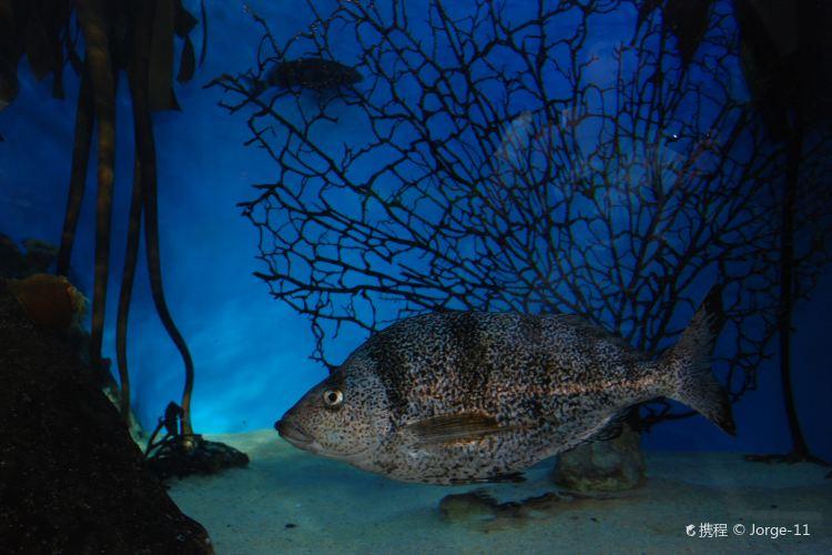 Two Oceans Aquarium2