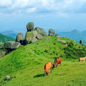浦北游记图文-广西钦州有块雄起石,美女们看了羞涩脸红