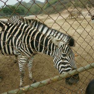 八达岭野生动物世界旅游景点攻略图