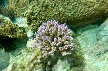 一起跟极之屋美女去潜水找珊瑚宝宝吧