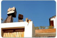 在莫干山里为爱宠打造出一个温馨的家!——莫干山糊涂家宠物民宿
