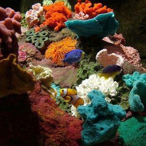丁勒海洋世界旅游景点攻略图