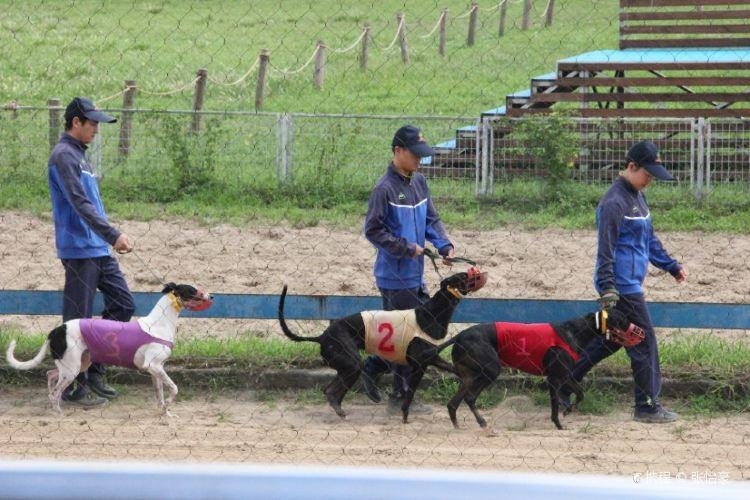 Shanghai Wild Animal Park Dog Racetrack1