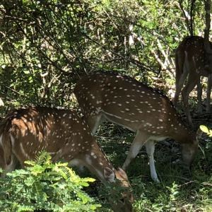 雅拉国家公园旅游景点攻略图