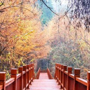 仙人崖旅游景点攻略图