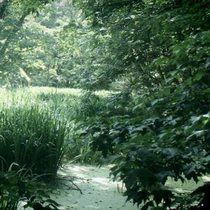 北海道大学植物园旅游景点攻略图