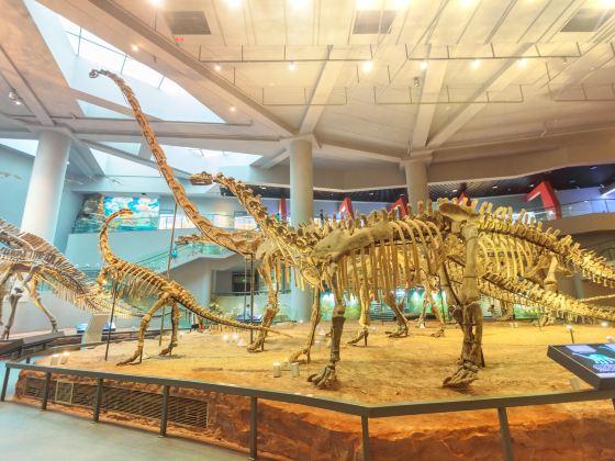 Chongqing Museum of Natural History  (New Hall)