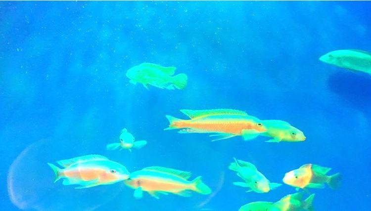 Xuzhou Underwater World