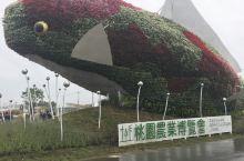 台湾游-2018年桃园农业博览会