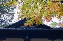东京妙福寺