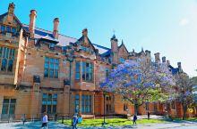 就在这个温柔浪漫的季节去悉尼大学和蓝花楹来一场浪漫之约吧