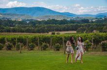 #向往的生活#在芭萝莎的酒庄山谷品味美好