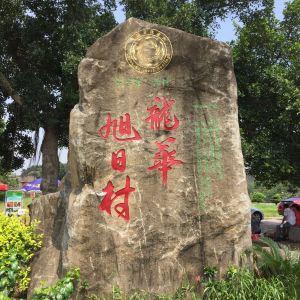龙华旭日古村落旅游景点攻略图