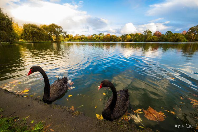 Western Springs Lakeside Park4