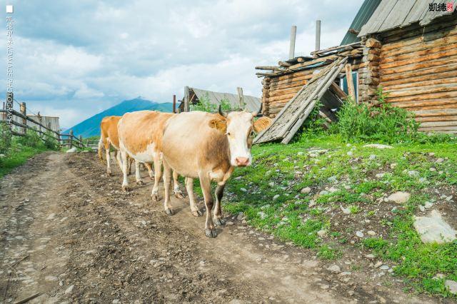 航拍新疆之旅:夏季自駕旅行寶典