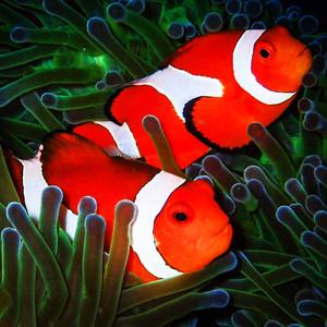 神仙珊瑚岛游记图文-一辈子都会珍藏的回忆 美到哭的马尔代夫神仙珊瑚岛